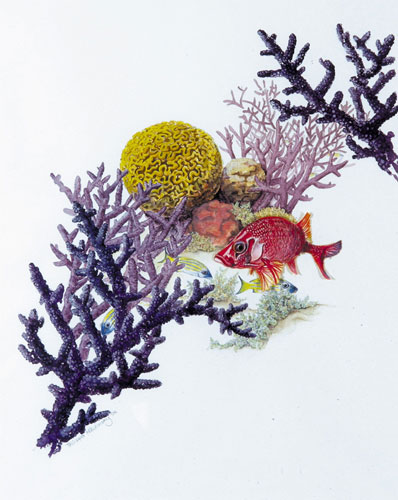 A red coloured fish swimming through purple, mauve, orange and yellow coral